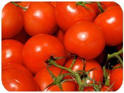 ژن ، گوجه فرنگی ، رمز گشایی ، رمز گشایی ژن گوجه فرنگی ، سایت رسمی مجید اخشابیटमाटर, जेनेटिक, कोड, खोज