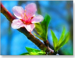 معجزۀ بهار