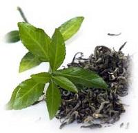 فواید چای سبز در رابطه با لاغری