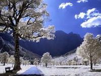 رویای برفی